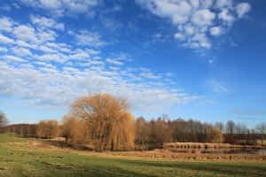 Schäfchen zählen im Dösner Park Leipzig