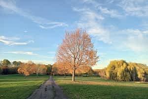 Herbst im Park Leipzig-Dösen (1)