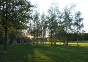 Birkenwäldchen im Park Leipzig-Dösen